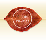 Autumn background with leaf. Vector illustration. Stock Photos