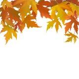 Autumn background with  leaflets Stock Photo