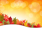 Autumn Background With Leafs Stock Image