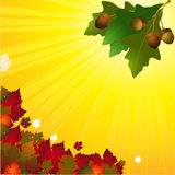 Autumn background with leafs and acorn Stock Photos