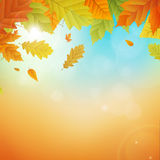 Autumn  background with leafs Royalty Free Stock Image