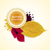 Autumn background with leafs and stains. Redviolet  and yellow. Vector illustration. Royalty Free Stock Photo