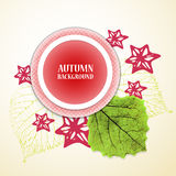 Autumn background with leafs and stars. Red and green. Vector illustration. Stock Photos