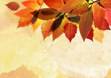 Autumn background leave. Beautiful autumn leave with oil painting texture Royalty Free Stock Photography