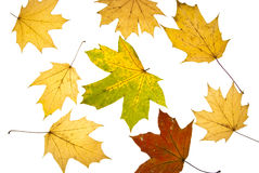 Autumn background from leaves Stock Photo