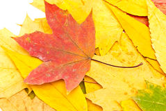Autumn background from leaves Royalty Free Stock Photos
