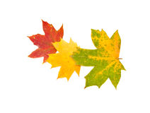 Autumn background from leaves Royalty Free Stock Image
