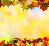 Autumn background with leaves stock photos