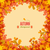 Autumn background with leaves. Autumnal circle frame background with maple and oak leaves Royalty Free Stock Photos