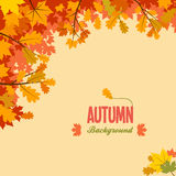 Autumn background with leaves. Autumnal frame background with maple and oak leaves Royalty Free Stock Photo