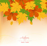 Autumn background with leaves. Back to school Royalty Free Stock Photo