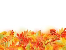 Autumn background with leaves. Back to school. Royalty Free Stock Image