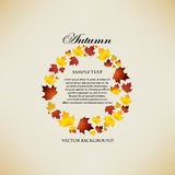 Autumn background with leaves Royalty Free Stock Images