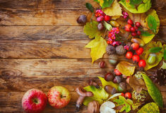 Autumn background with leaves, berries, apple and mushroom Royalty Free Stock Image