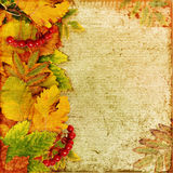 Autumn background with leaves and berries Stock Photography