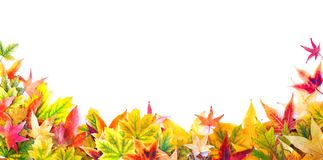 Autumn Background of Leaves, Berries, Flowers and Pumpkins Stock Image