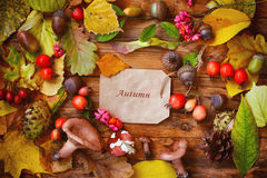 Autumn background with leaves, berries, mushrooms Royalty Free Stock Images