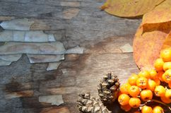 Autumn background/ Autumn leaves and berry/ Thanksgiving day concept. bright orange berries, autumn fallen leaves, cones royalty free stock images