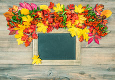Autumn background with leaves and blackboard. Vibrant colors Stock Photos