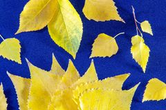 Autumn background with leaves and on blue royalty free stock images