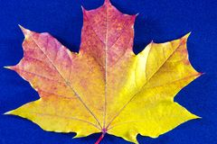Autumn background with leaves and on blue royalty free stock photography