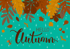 Autumn background with leaves on blue rain drop backdrop Stock Photography