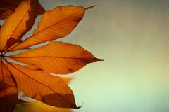Autumn background with leaves of chestnut Royalty Free Stock Image