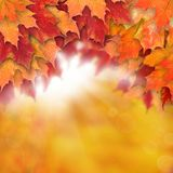 Autumn background with leaves. Colorful fall leaves and abstract gold bokeh light stock image