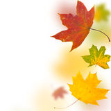 Autumn background from leaves of different colour Stock Photo
