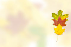 Autumn background from leaves of different colour Royalty Free Stock Photos