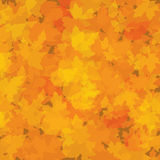 Autumn background with leaves Stock Image