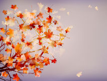 Autumn background with leaves. EPS 10 Royalty Free Stock Photography
