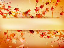 Autumn background with leaves. EPS 10 Stock Photography