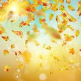 Autumn background with leaves. EPS 10 vector Stock Photography
