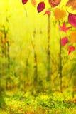 Autumn background 2 Stock Photo