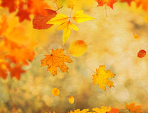 An autumn background Royalty Free Stock Images