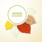 Autumn background with leaves. Linden and cherry. Vector illustration. Eps 10 Stock Images