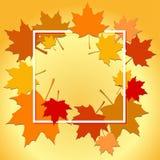 Autumn background leaves Stock Photos