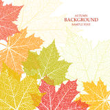 Autumn background and leaves of a maple. For design vector illustration