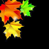 Autumn background with leaves. Maple leaf vector illustration Royalty Free Stock Images