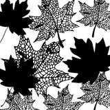 Autumn background with leaves. Maple leaf. Vector illustration Stock Photography