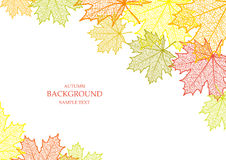 Autumn background and leaves of a maple. For web-design stock illustration