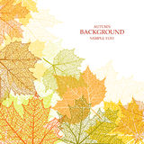 Autumn background and leaves of a maple. For web-design Royalty Free Stock Photography