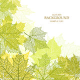 Autumn background and leaves of a maple. For web-design vector illustration