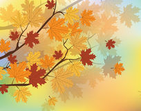 Autumn background with leaves. Orange Autumn Maple Leaves on tree. Vector stock illustration