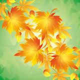Autumn background with leaves,  place for text Royalty Free Stock Images