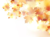 Autumn background with leaves. plus EPS10 Royalty Free Stock Images