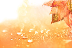 Autumn background with leaves and  rain water drops Royalty Free Stock Photo