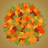 Autumn background of leaves round maple. Royalty Free Stock Photos