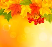 Autumn background with leaves and rowan Stock Photography